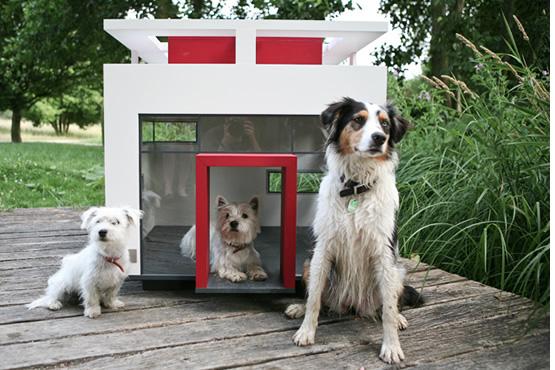 caseta de lujo para perros