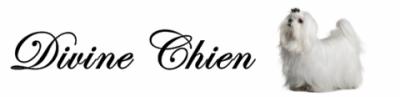 Divine Chien
