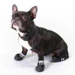 botas para perros