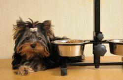 alimento de calidad para perros