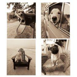 cuadros de perros