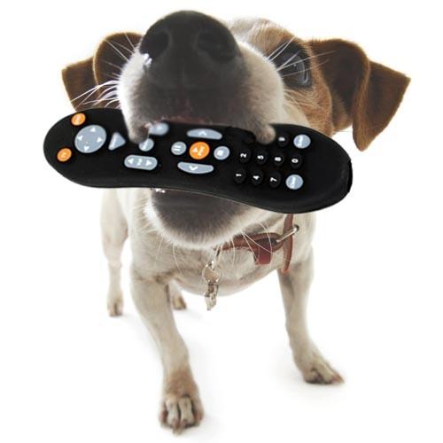 mando a distancia para perros