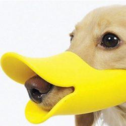 bozal para perro original