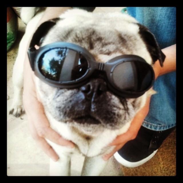gafas para perro