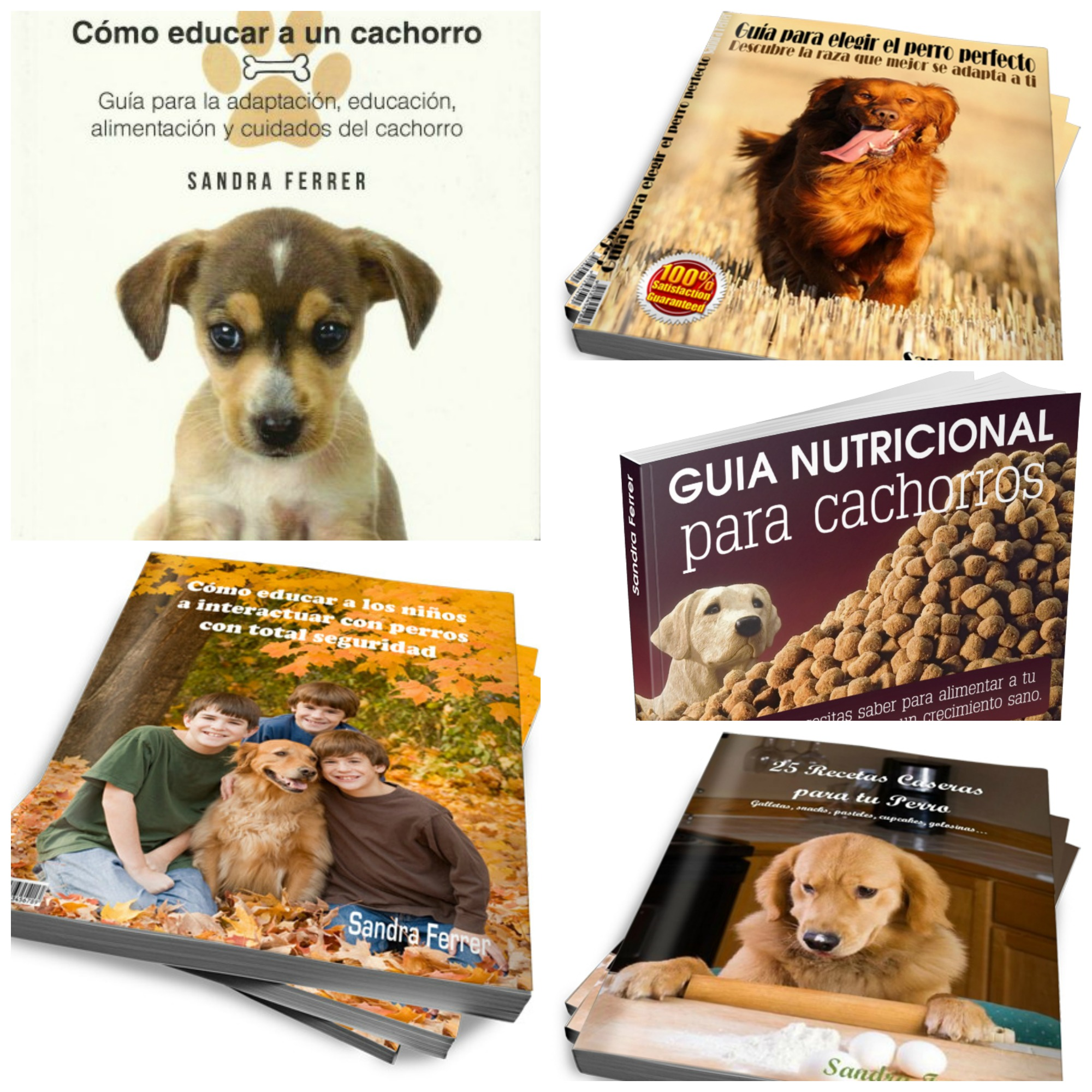 manuales de educación canina para principiantes