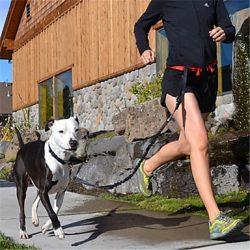 correa para correr con perro