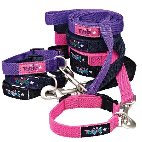 conjunto de paseo para perro