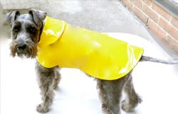 chubasquero para perro