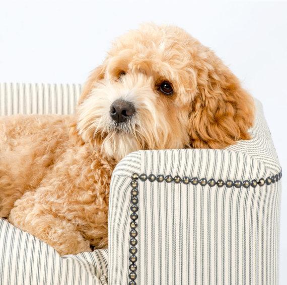 sillón chesterfield para perro