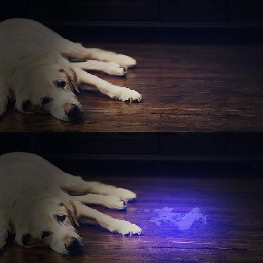 linterna ultravioleta para pipis de perros
