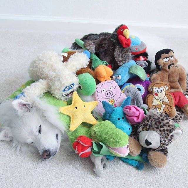 10 posibles regalos de Navidad para un perro