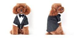 disfraz de gala para perro