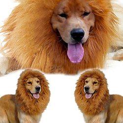 peluca para perros