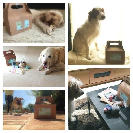 Caja sorpresa para perros