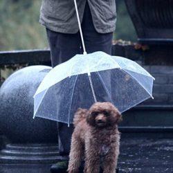 paraguas para perros