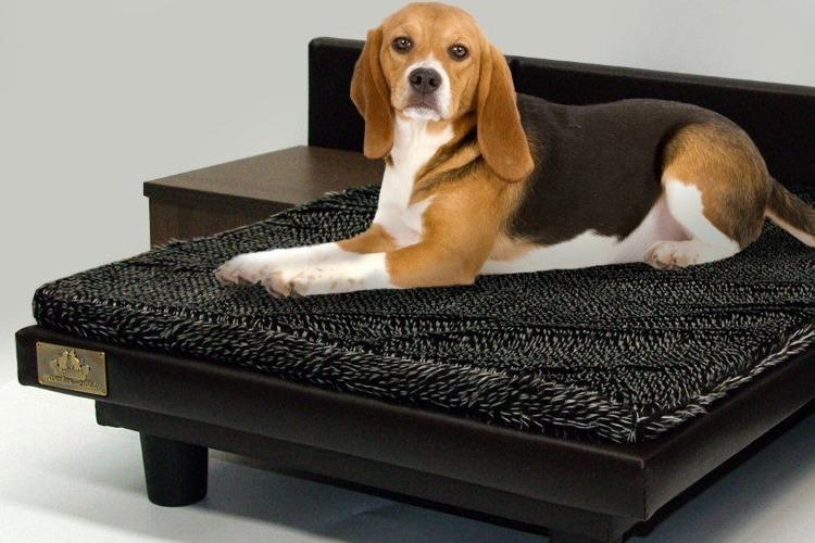 cama con mesitas para perro