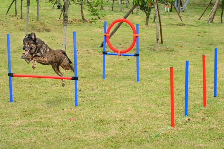 Set de agility para perros para casa