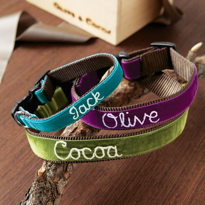 collar para perro personalizado