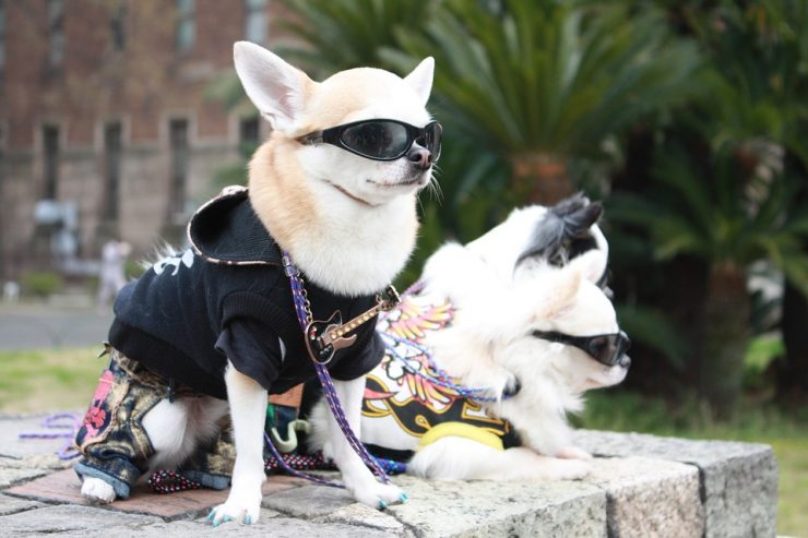 articulos para perros